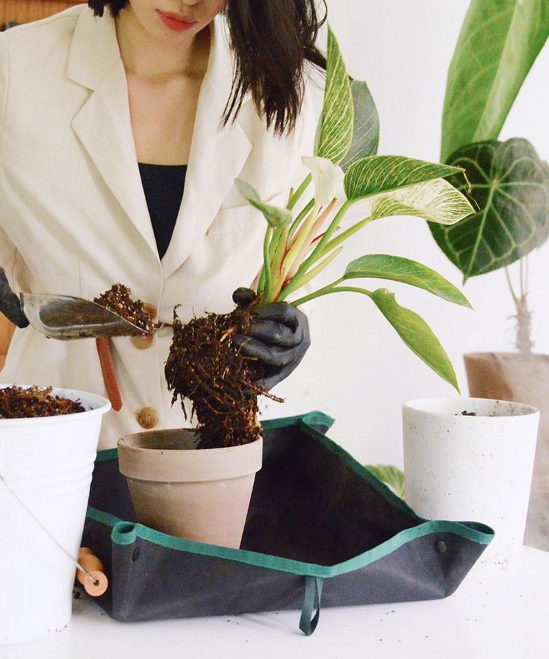 CRV3911 PLANT MORE PLANTS 聯名植栽換盆墊
